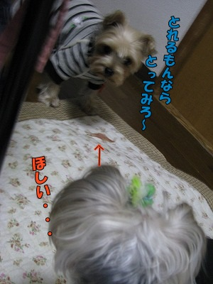 IMG_1593.jpg