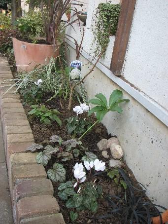 Oさんの庭2009_12#6