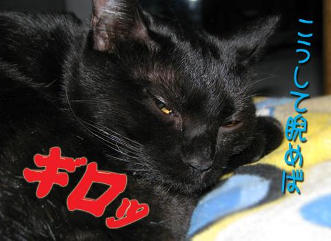 004_R_20100107132925.jpg