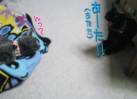 051_Rのコピー