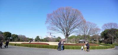 2010.2.20-東京ぶらりひとり旅005~東御苑018~「本丸大芝生」2