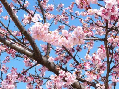 2010.2.20-東京ぶらりひとり旅005~東御苑024~「早咲きの桜」01