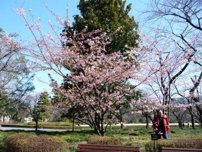 2010.2.20-東京ぶらりひとり旅005~東御苑025~「早咲きの桜」02