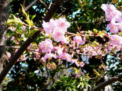 2010.2.20-東京ぶらりひとり旅005~東御苑026~「早咲きの桜」03