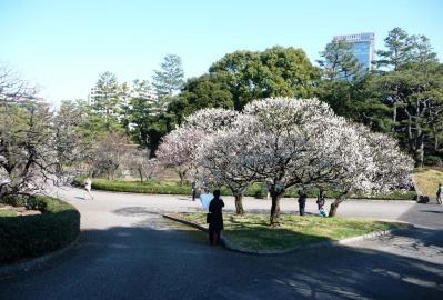 2010.2.20-東京ぶらりひとり旅005~東御苑033~梅林坂07