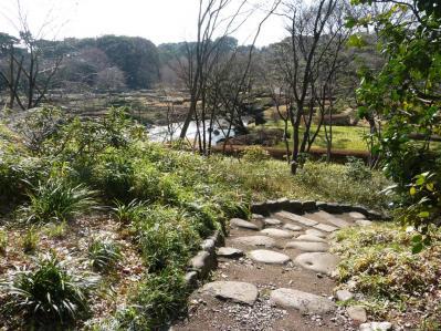 2010.2.20-東京ぶらりひとり旅005~東御苑036~二の丸雑木林06