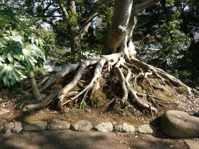2010.2.20-東京ぶらりひとり旅005~東御苑036~二の丸雑木林09