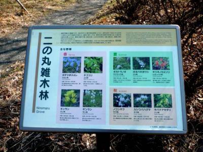 2010.2.20-東京ぶらりひとり旅005~東御苑036~二の丸雑木林11