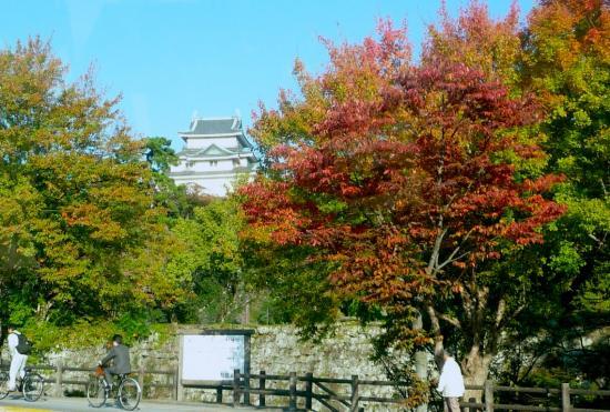 秋の和歌山城2010