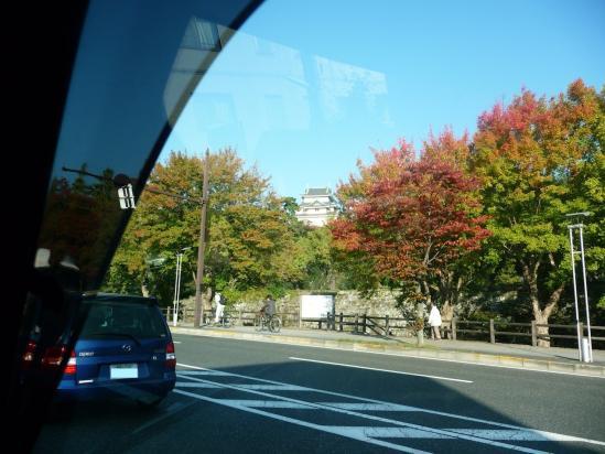 秋の和歌山城2010 -01