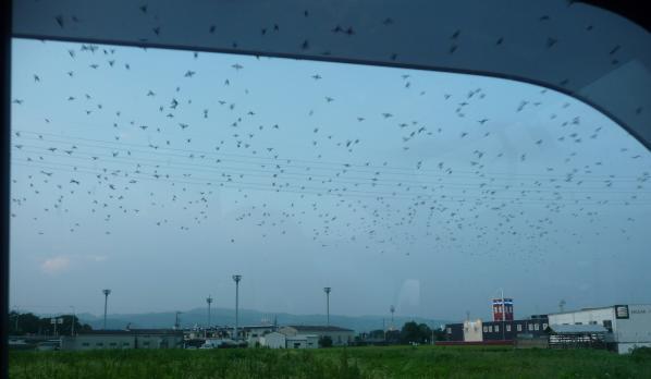 雀の集会2010~04