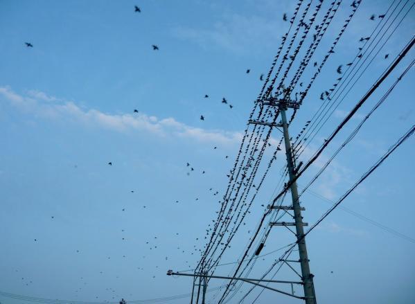 雀の集会2010~01