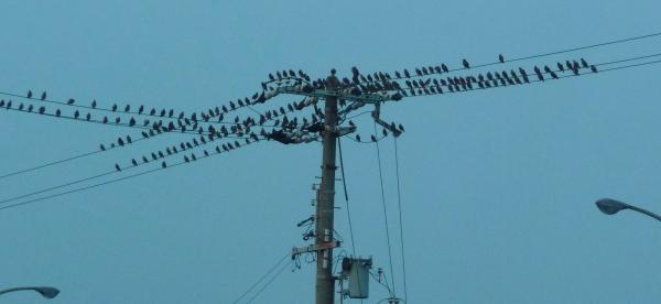雀の集会2010~03