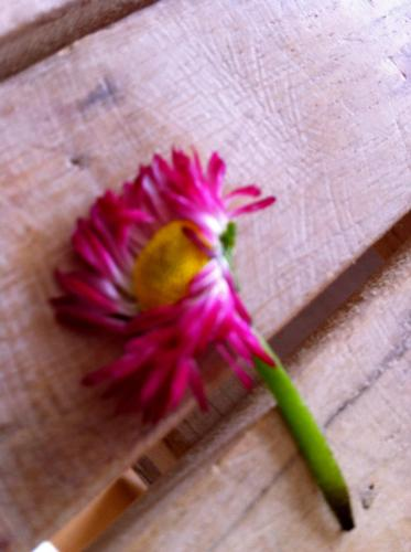 2011:5:25 お花