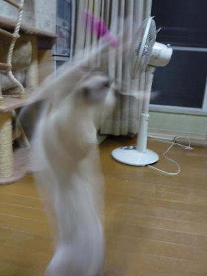 20090908_004.jpg