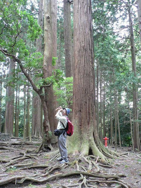 杉の林で天狗の真似