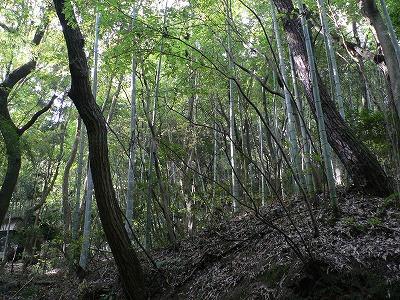 02星田山にも竹の侵略が