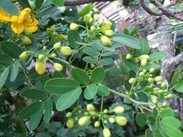 自宅の花 (4)