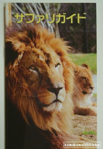 ライオン_8