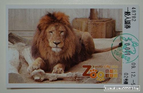 ライオン_47
