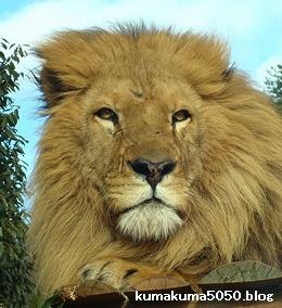 ライオン_63