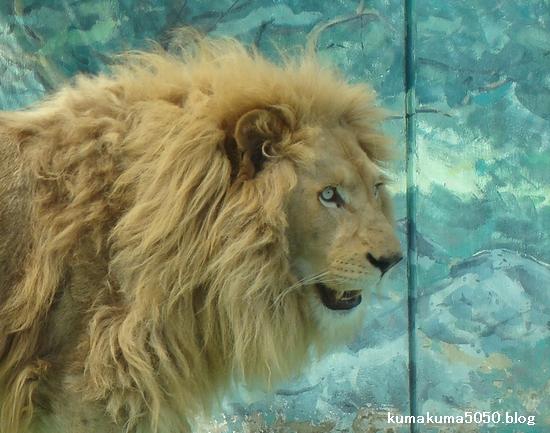 ホワイトライオン_31