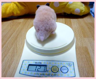 日記10・16体重2