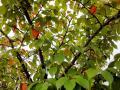 110524_autumn-3-2