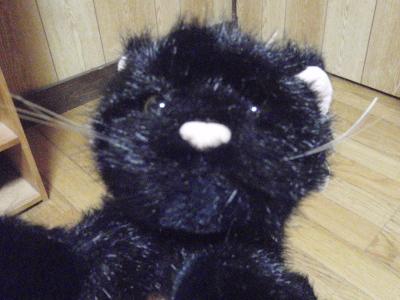 黒猫さん2