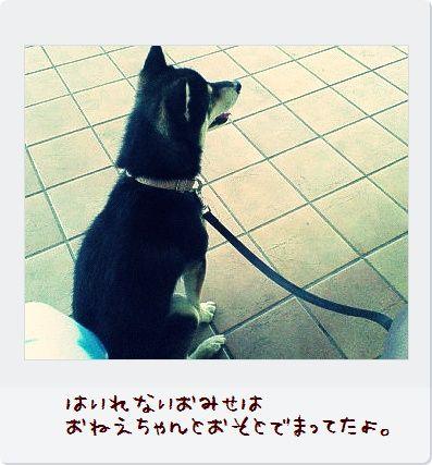 NEC_0240m.jpg