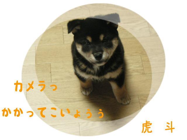 じぃぃぃ~