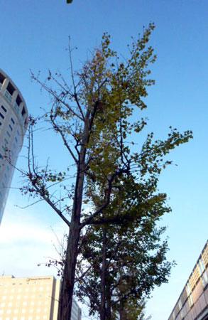 2011-10-31-4.jpg