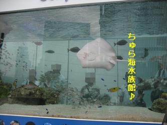水族館!?