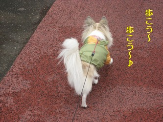 歩こう?♪