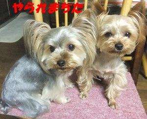 DSCF7740_20110611233241.jpg