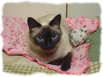 catcatcattt1.jpg