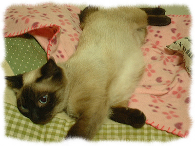 catcatcattt2.jpg