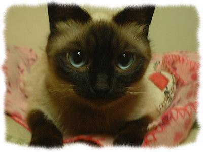 catcatcattt3.jpg