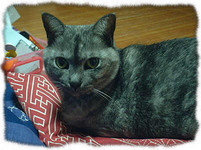 catcatcattt5.jpg
