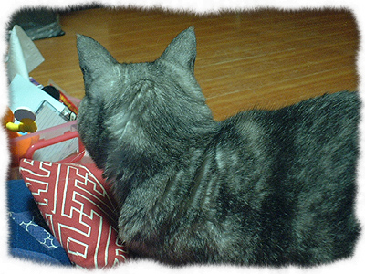 catcatcattt6.jpg
