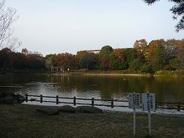 あひるの公園 1