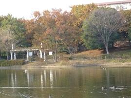 あひるの公園 2
