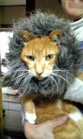 ライオン丸ちい