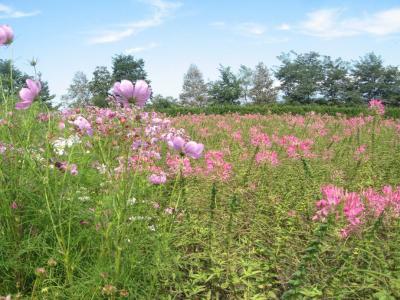 2010.09.11北海道旅行 181