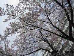 2011年4月14日 009