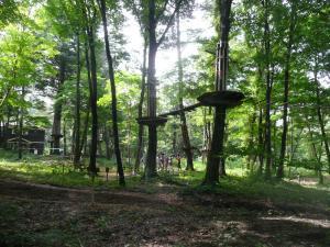 ルオムの森♪