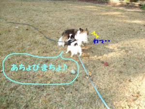 20091029-3.jpg