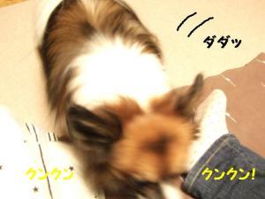 2009118-6.jpg