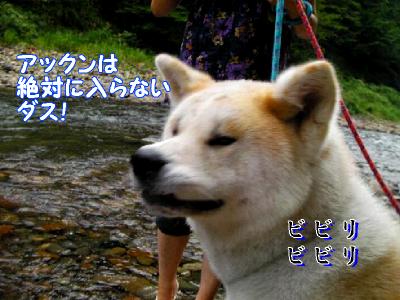 aki_20100825170854.png