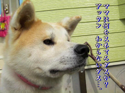 aki_20101025173255.png